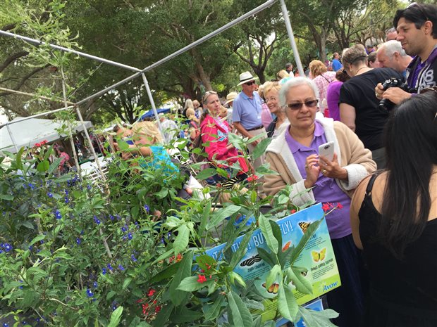 Avow Hospice Hosts Butterfly Release